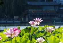 6天上海+杭州