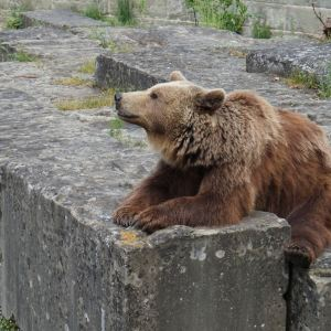 伯尔尼熊公园旅游景点攻略图