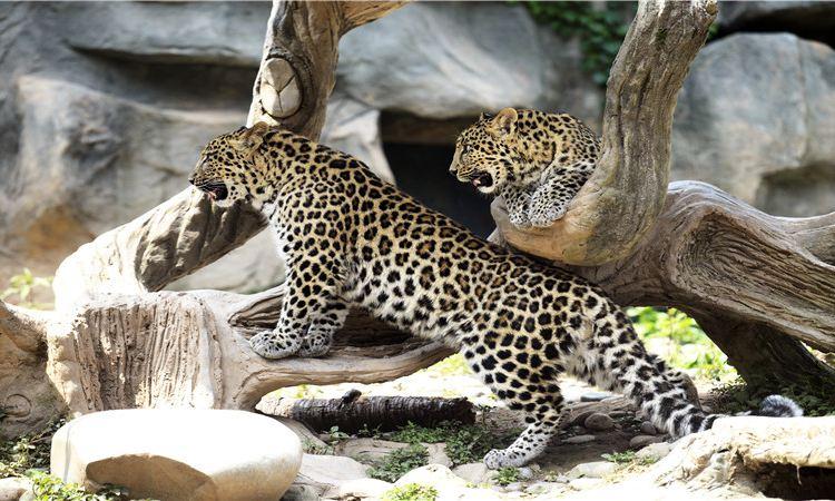 碧峰峽野生動物園1
