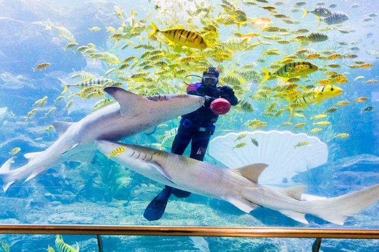 青島海底世界