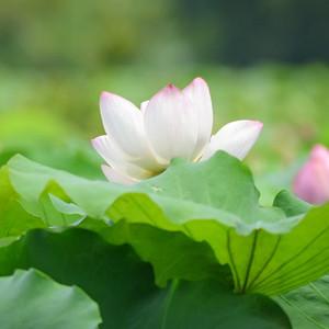 阳澄湖游记图文-苏州相城,蕴秀藏雅的活力之地