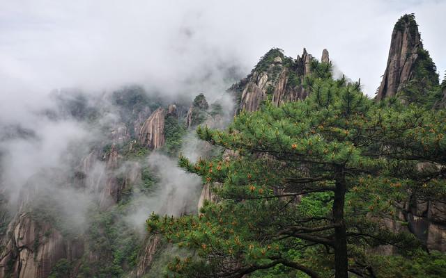 黄山访松、三清拜道、庐山寻瀑、九华礼佛--黄山、三清山、庐山、九华山二十一日游