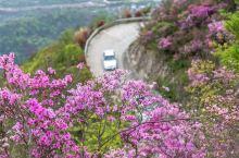 奉化金峨山满山遍野的杜鹃花如火焰般热烈,现在是赏花最佳期!惊艳所有人!