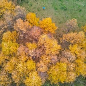 汉中游记图文-秦岭最美的秋天在留坝,自驾红叶秘境,附最佳观赏点攻略