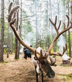 [呼伦贝尔游记图片] 25度夏天的呼伦贝尔草原,感受丛林秘境,探访驯鹿民族