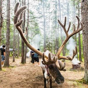 呼伦贝尔游记图文-25度夏天的呼伦贝尔草原,感受丛林秘境,探访驯鹿民族