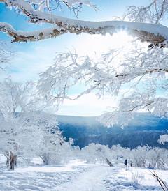 [喀纳斯游记图片] 【打卡新疆】她拥有着国内冬天最美的雪景,有一百零一个北京那么大,冬天很美