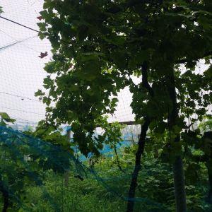 阜阳生态园旅游景点攻略图
