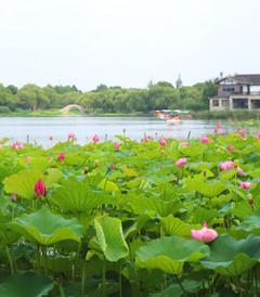 [常熟游记图片] 吃面、赏荷、泡酒店,这个端午假期我们倘佯在江南烟雨间。