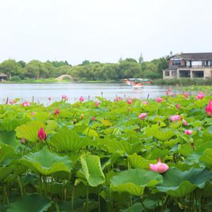 昆山游记图文-吃面、赏荷、泡酒店,这个端午假期我们倘佯在江南烟雨间。
