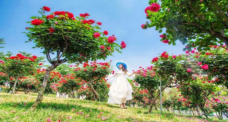 漫花荘園4