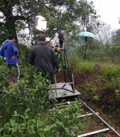 [龙州游记图片] 雨中的茶山上,他们撑着伞拍音乐电影,真是一群兢兢业业的年轻人