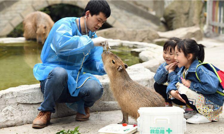 백봉협 야생 동물원2