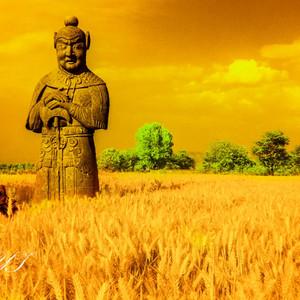 河间游记图文-徐屹:麦田中的守望者