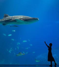 [珠海游记图片] 珠海横琴岛,我喜欢的样子你都有(含详细攻略)
