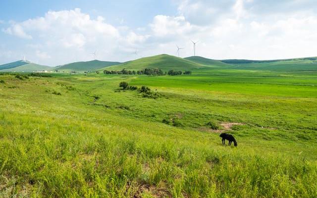自驾七彩森林,寻找最美大草原16℃的夏天
