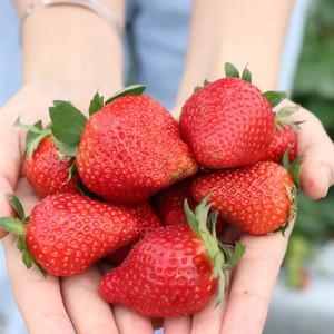 三水区游记图文-出发!花海免费赏、摘草莓有福利…珠三角最美春天就藏在三水