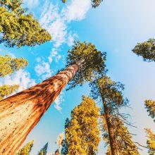 红杉国家公园图片