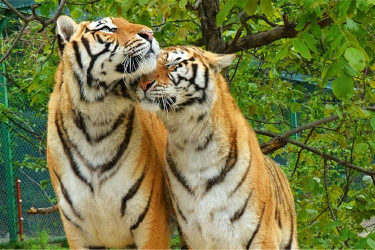 Luanchuanzhuhai Yesheng Zoo