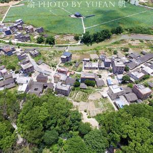 新丰游记图文-广东的国家森林乡村,隐于珠三角后花园的古香樟林,至今鲜为人知