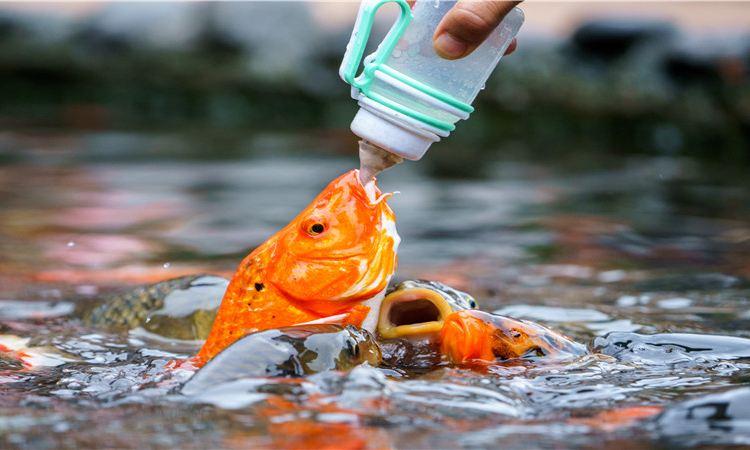 碧峰峽野生動物園2