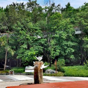 美人松苑旅游景点攻略图