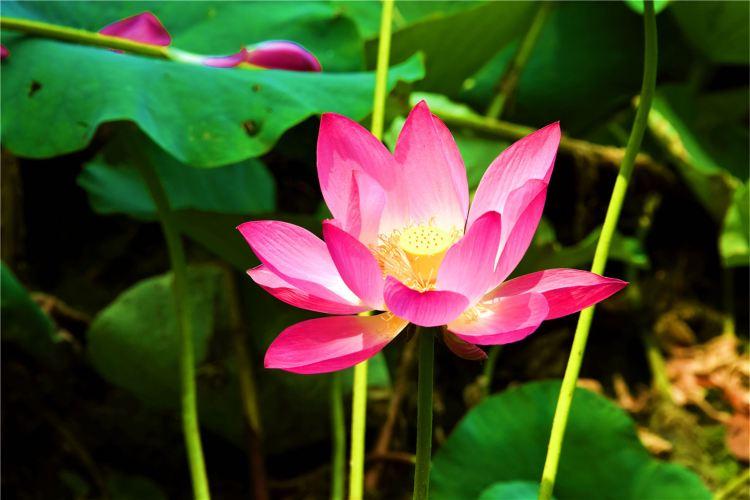 Weishan Wetland Park4