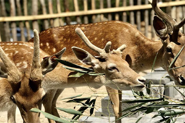Luanchuanzhuhai Yesheng Zoo3
