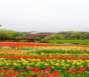 铜陵游记图文-那一年,红色之旅大别山,我在安徽铜陵市探春色 ▏铜陵市自驾游实用攻略 ▏春游安徽实用攻略 ▏2021