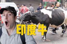 印度的牛真的满街走吗?还有5000只老鼠住神庙!