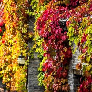古北水镇游记图文-红了红了,这个秋天,TA彻底红了!