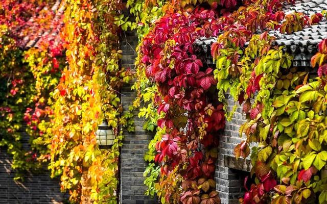 红了红了,这个秋天,TA彻底红了!