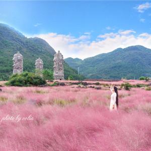 酉阳游记图文-赏粉黛花海、游世外桃源、逛龚滩古镇 这是打开重庆周边游的最佳方式