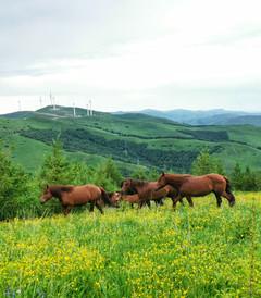 [北京游记图片] 【自驾草原】畅玩欢乐谷、三伏天来20°的草原盖棉被