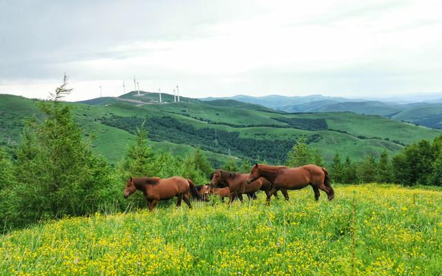 【自驾草原】畅玩欢乐谷、三伏天来20°的草原盖棉被