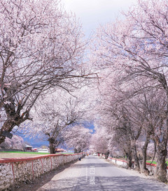[拉萨游记图片] 什么是春天,就是那桃花漫山的西藏。【赴一场春天的约会】