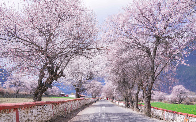 什么是春天,就是那桃花漫山的西藏。【赴一场春天的约会】