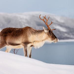 北极游记图文-北极怎么玩?这一篇或许说清楚了
