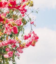 [丽江游记图片] 如果你失恋了,请接收来自大理、丽江、泸沽湖的一封告白情书