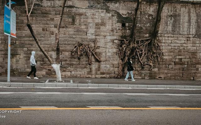 重庆森林,一部现实与梦境交织的电影