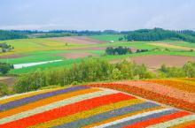 日本北海道,遇见最美花海    美瑛町 ,是北海道的一个乡村,由于处在高低起伏的丘陵地带上,日本人就