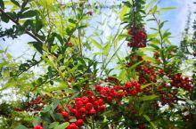 红豆生南国,春来发几枝