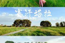 赛罕塔拉|去中国最大的天然城中草原避暑