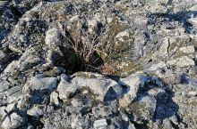 五大连池风景区的翻花石海景观十分壮观,下图即是我拍摄的喷气碟,在这片石海里,有很多类似这样大大小小的