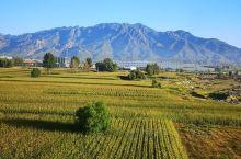 从呼和浩特到包头,沿着阴山山脉中段的大青山南麓,玉米地、光电场一路绵延。山坡上的白塔是美岱召。从中央