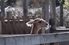 柳岸野生动物保护区