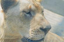 潮州可以看大狮纸!!太棒啦