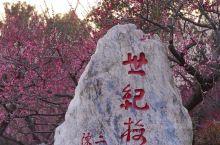 上海周边赏花踏青好去处 世纪公园