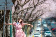 国内樱花3月一帘春雨樱花落,4月至首