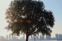 武昌江滩的灯塔和孤独的树